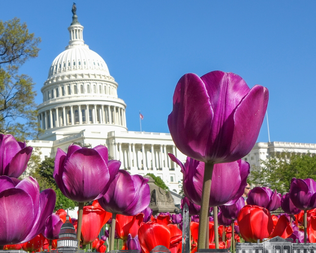 Calling All Friends: Are You Going to Washington DC?